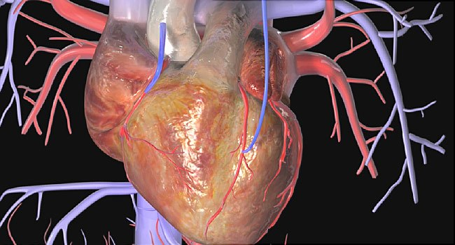 Types of Cardiac Surgeries and Treatments2